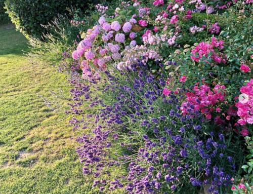 Blütenpracht in Norddeutschland